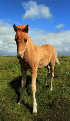 Baby Horse - So Sweet