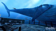 """In the VR experience """"TheBlu,"""" users enjoy a close encounter with an 80-foot blue whale."""