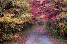 Cedar Pond Fall Color  Photo by Denise Schmittou