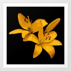 Golden Yellow Lilies Art Print by Bebop's Place - $16.64