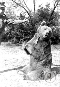 Move over, Paddington! He had a taste for vodka and adored wrestling with his army buddies - now the makers of The Snowman are to tell the heart-melting story of the bear named Wojtek who went to war Animals And Pets, Funny Animals, Cute Animals, Wojtek Bear, Animal Magic, Bear Art, American War, Funny Animal Pictures, North Africa