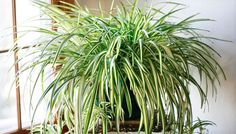 Clean The Polluted Air in Your Home With These Houseplants
