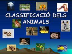 Classificació dels animals by SerradePrades via slideshare