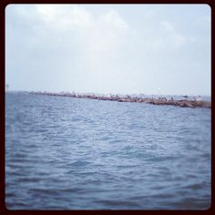 Texas city jetties