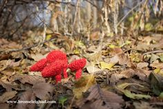 Bromeleighad: Knitting and Nature: 52 Forms of Fungi || #36