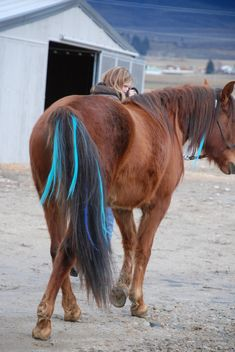 Colorful hair extensions for horse manes and tails :-D