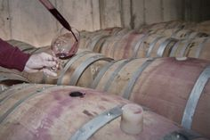 Catando barricas / tasting from barrels