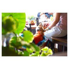 ワンちゃんと一緒にくつろぎながらランチ♡ #カフェラポッサ #大阪 #古民家カフェ #cafelapossa #Osaka #ドッグカフェ