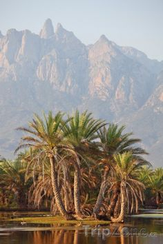 Socotra (Jemen)