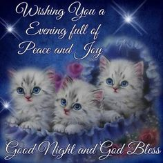 Wishing You A Evening Full Of Peace And Joy good night good evening good night wishes good night greetings Good Night Cat, Good Night Thoughts, Good Night Sister, Good Night Prayer, Good Night Blessings, Good Night Sweet Dreams, Good Night Image, Good Night Quotes, Cute Good Night Messages