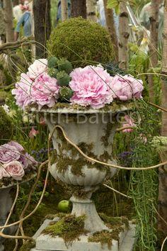 Chelsea Flower show display