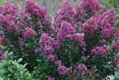 If you are looking for plants that bloom throughout the summer in a sunny location, crape myrtle, roses and butterfly bush are the plants for you.  http://www.hicksnurseries.com/trees-and-shrubs/3-best-summer-flowering-plants-sunny-gardens/