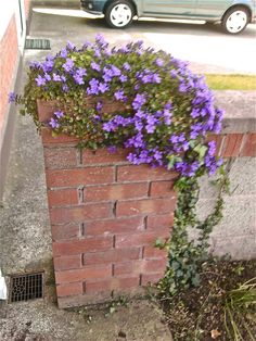 Hollow out brick pillar, fill with soil and plant a trailing perennial such as aubretia or snow in summer.