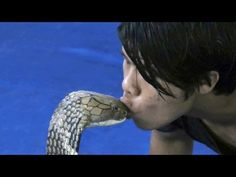 Watch What Happens When This Man Kisses King Cobra…… This Video Will Shock You!