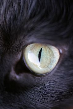 Cat Eyes Click here to learn how to stop your cats from spraying in your house.