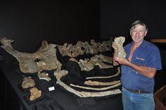 David Elliott poses with the bones of Savannasaurus.