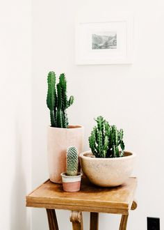 Side Table With Planters of Cacti