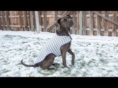 Dainty Dog Coat Pattern For Your Beloved Canine
