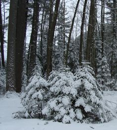 A cluster of snowy trees at Marywood Snowy Trees, Spirituality, Outdoor, Outdoors, Spiritual, Outdoor Games, Outdoor Life