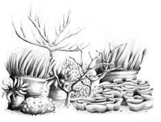 Coral Reef Drawing