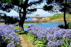 Moulin à marée, île de Bréhat - © JACOB Mathieu - Fotolia.com #garden #bretagne #flower #jardin
