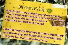 Easy Homestead: DIY Fly Trap / Gnat Trap