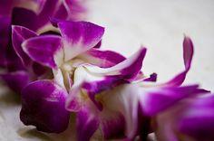 Fresh Flower Lei
