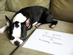 dog shaming- so funny!