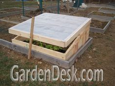 Convert a 4x4 square foot garden bed into a cold frame! Yay, fresh organic greens all year long!