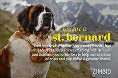 I took Zimbio's 'What Kind of Dog Are You? quiz and I'm a St. Bernard. What kind are you?null - Quiz