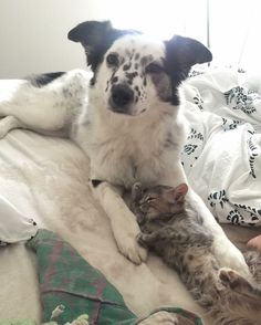A rescue dog surprised her owner when she took to a little orphaned kitty and started raising her as her own. Meet Dottie and Luci!imgur/abbzzzzA year ago, a young woman (imgur user abbzzzz) found a sick kitten in a tree who was in desperate need of help. She brought her home and nursed her back to ...