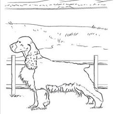 irish terrier coloring pages - photo#23