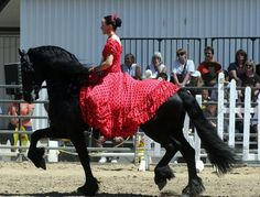 The Friesian horse is easily recognizable because of its black coat and thick build. They are mostly used in dressage and pleasure riding and are also a popular pick in Hollywood movies and clothing ads