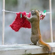Quando esquilos invadem o seu quintal, qual é o seu primeiro pensamento? Afugentá-los? Nancy Rose resolveu se divertir um pouco com os seus novos amigos.