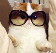 You describe me as a cat with sunglasses on when i look at myself in the mirror i see a cat that could be the next Justin Beiber!