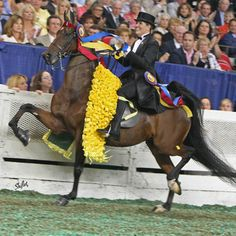 Mary Marcumm-Orr & CH Our Charming Lady...3-Gaited World's Grand Champion & Overall 3-Gaited Horse of the Year