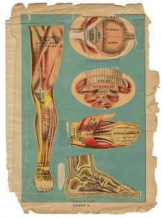 Library of Health - leg arm hand foot | Flickr - Photo Sharing!