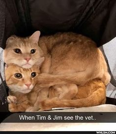 Cute Little Animals, Cute Funny Animals, Funny Cute, Cute Cats, Image Chat, Funny Cat Photos, Funny Animal Memes, Cute Creatures, Crazy Cats