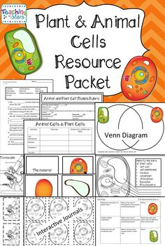 Animal and Plant Cell Unit is an engaging and hands on unit that can supplement activities to your science curriculum. Vocabulary development and cell function are keys in learning about plants and animal cells. Interactive journaling and comparing animal Teaching Cells, Teaching Science, Science Lessons, Life Science, Science Activities, Weird Science, Teaching Resources, Teaching Ideas, Plant Cell Model