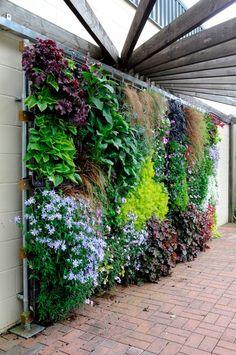 Mur végétal avec sélection de plantes craignant le soleil diect chaud. Www.monjardin-materrasse.com