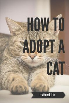 How To Adopt a Cat: Five Steps to Your Perfect Pet Introducing A New Cat, Calming Cat, Foster Animals, Foster Parenting, Parenting Tips, Easy Pets, Outdoor Cats, Cat Behavior, Cat Facts