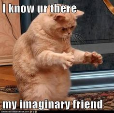 New Funny Cats Memes Hilarious Animal Pictures Ideas I Love Cats, Crazy Cats, Cute Cats, Pretty Cats, Beautiful Cats, Funny Animal Pictures, Funny Animals, Cute Animals, Animal Quotes