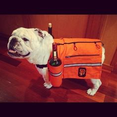 28. And bulldogs are happy to help you carry a bottle. | 38 Reasons Jameson Is The Liquor Of The Gods