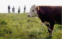 Grass-fed beef in more pastures and on more plates : Business