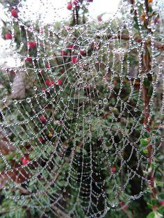 ˚Dewy Spider Web