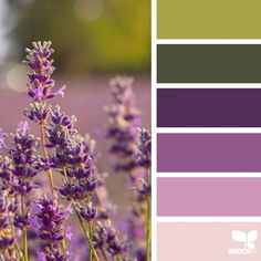 today's inspiration image for { color nature } is by . thank you, Kathryn, for another incredible image… Color Lila, Make Color, Color Of Life, Design Seeds, Pantone, Color Palette Challenge, Color Schemes Design, Color Magic, Color Profile