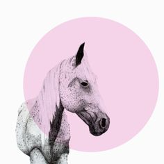 Stock Photo : speckled horse