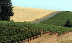 An Oregon pinot noir came in third on Wine Spectator's annual list of the world's best wines.