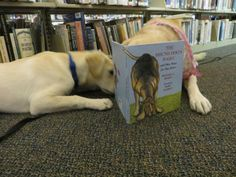 Perfect Picture Book The Hound Dog's Haiku by Michael J. Rosen ages 5-8 dogs http://readingwithrhythm.wordpress.com/2014/04/04/the-hound-dogs-haiku/