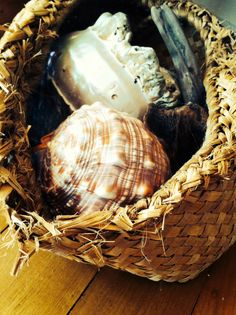 Old collection of sea shells in grandads kete